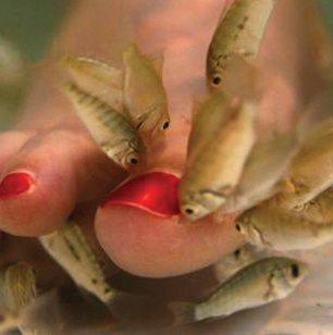 fisk-pedicure